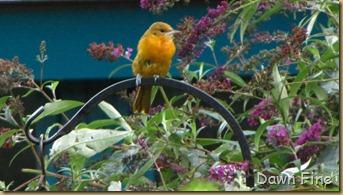 Wellfleet Audubon_004