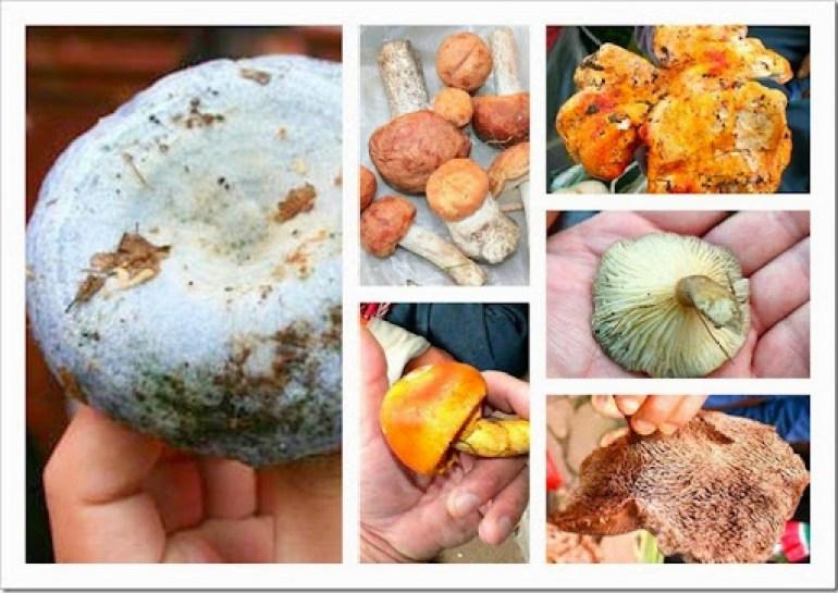Mushroom soup mexican varities