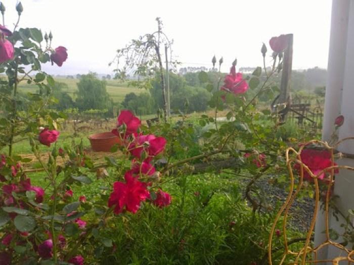 my garden oct 2014 (23)