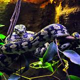 bioparc-snake.jpg