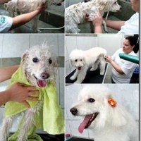 4 dicas recomendadas por veterinários e petshop para o banho de seu cachorro