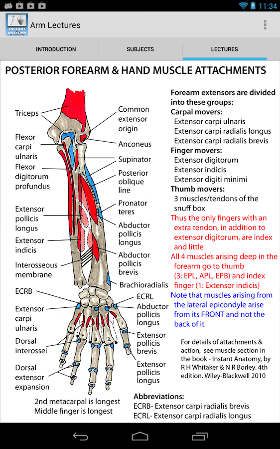 Ankle Anatomy Posterior Triangle