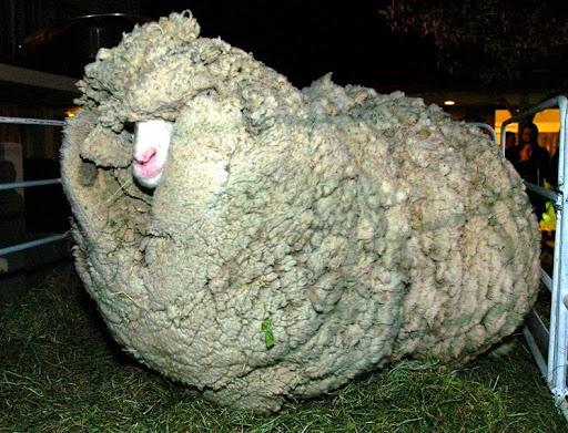 shrek-the-sheep-3