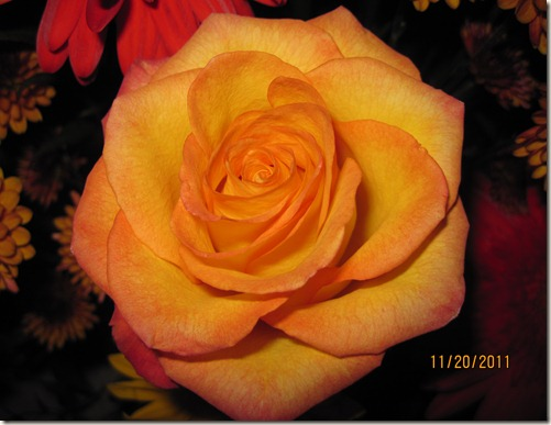 flowers,Tumblerflimsy 003