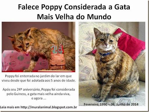 Falece Poppy Considerada Gata