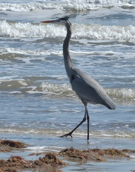 Padre Island and_067