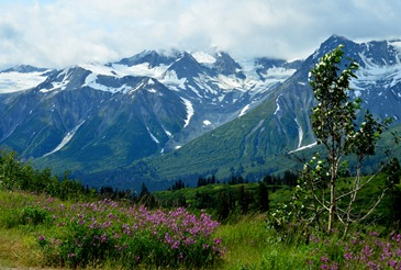 shifting habitats on the Haines Highway