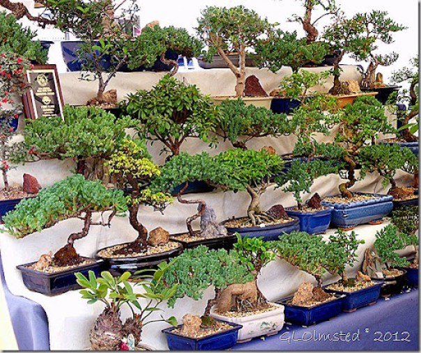 Bonsai trees for sale at Gold Rush Days Wickenburg Arizona