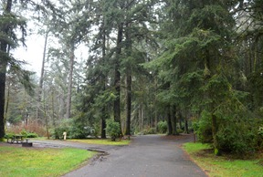 a dark day in the forest at Fort Stevens SP