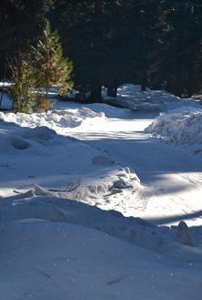 winter ice around home (10)