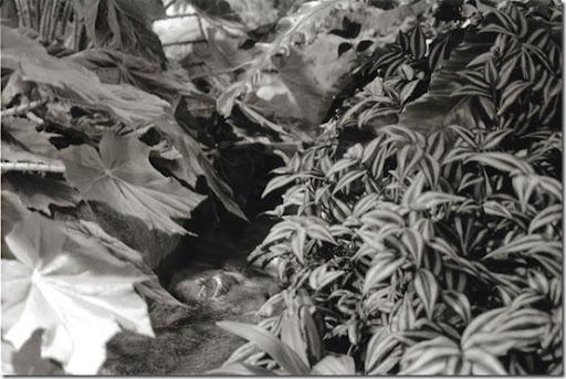 Botanical-Gardens-10-AP-56-Y-6-M-9