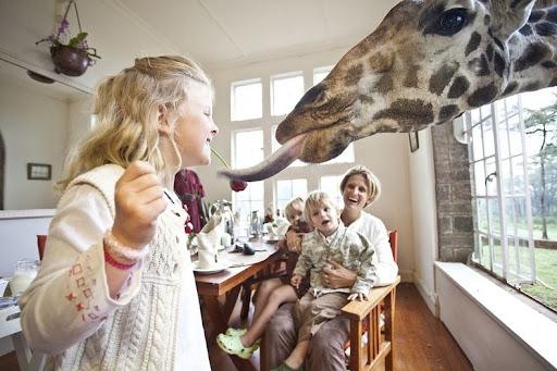giraffa-manor-4