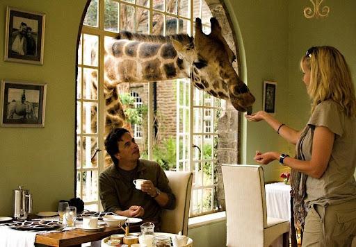 giraffa-maniero-8