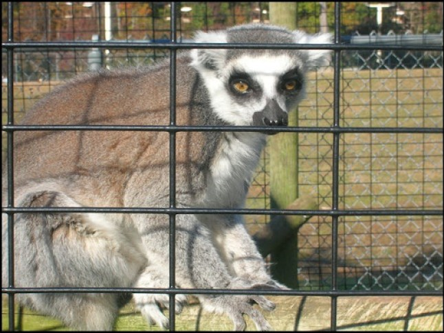 Richmond Metro Zoo 3rd Grade MES Field Trip 047