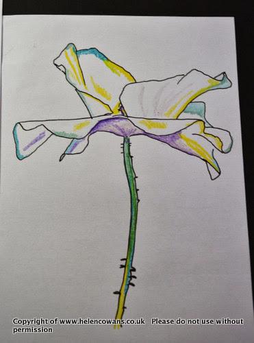 Poppy sketch 2