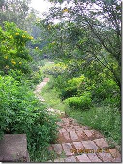 VidyaSury path