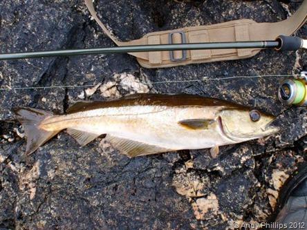 Cornwall Fishing 2012_8