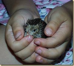 Rachel chick