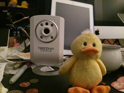 Duck in focus, bad exposure
