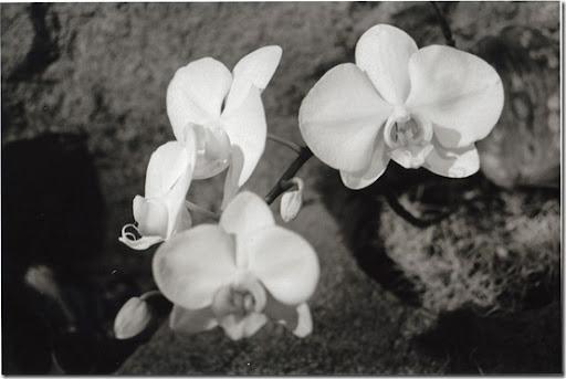 Botanical-Gardens-13-AP-56-Y-5-M-7