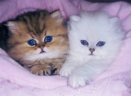 Biscuit and Bon Bon