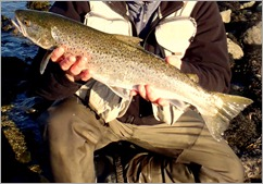 Seatrout fishing Ireland