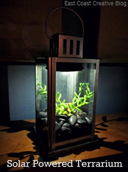 Solar Powered Terrarium