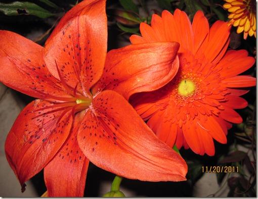 flowers,Tumblerflimsy 005