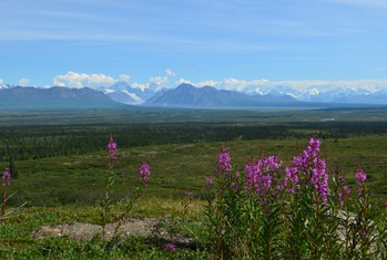 Denali Day 17_2001