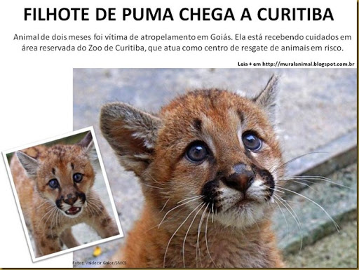 puma_curitiba