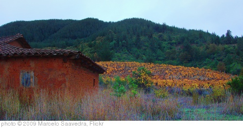 'campo' photo (c) 2009, Marcelo Saavedra - license: http://creativecommons.org/licenses/by/2.0/