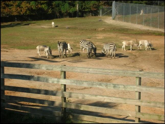 Richmond Metro Zoo 3rd Grade MES Field Trip 071