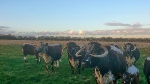 Field 3 cows (6)