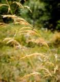 20120908-DSCF6631.jpg