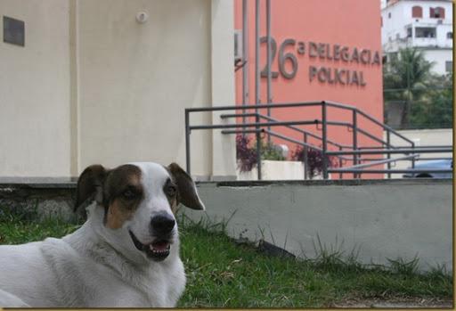 Toby o Cão da 26 DP