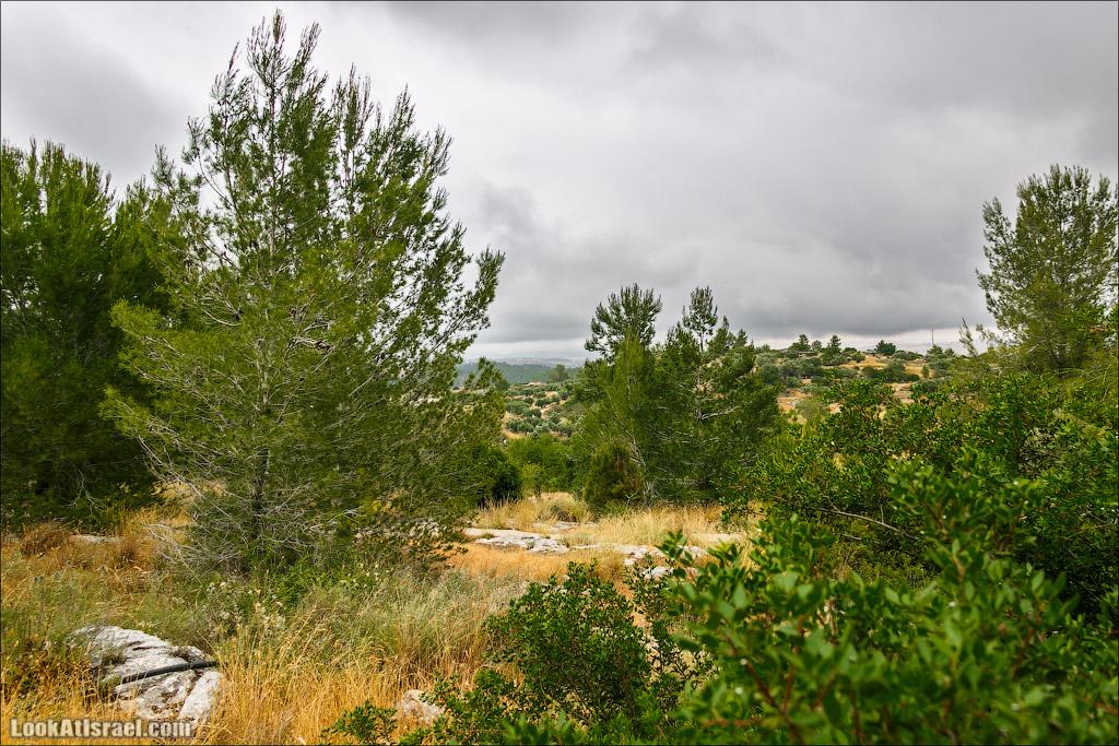 Неот Кдумим - Сад библейской природы