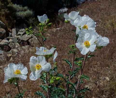 Great Basin-85