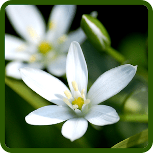 Flowers Wallpapers apk