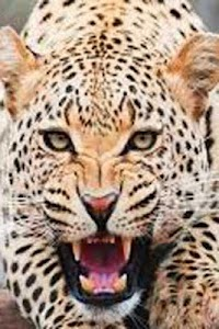 How To Draw Cheetah Animal screenshot 0