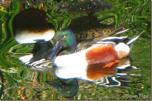 sweetwater wetlands_071