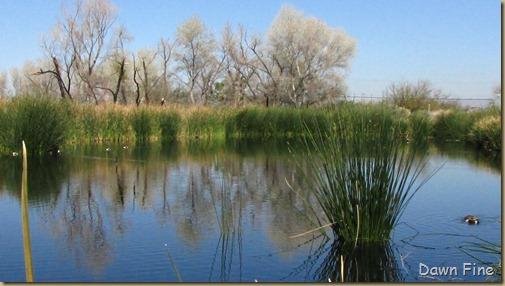 sweetwater wetlands_035