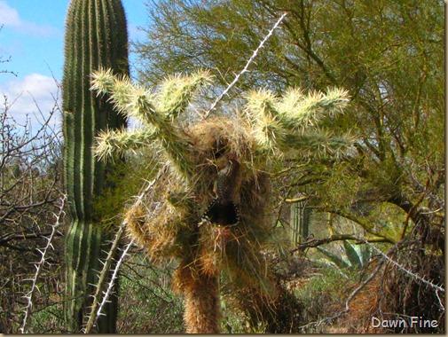 Desert museum_323