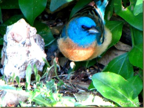 big sit birds_056