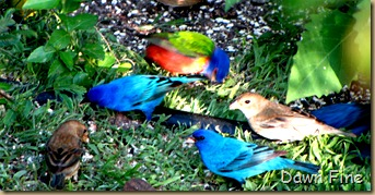 big sit birds_054