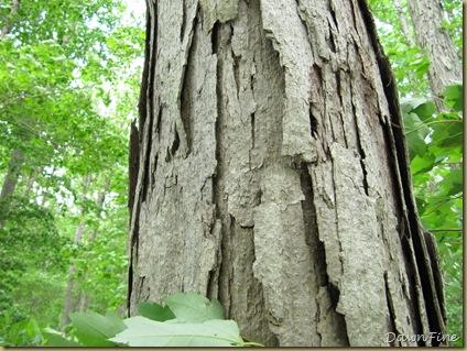 Killens Pond State park DE_20090513_010