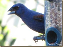 Birdies_20090427_013