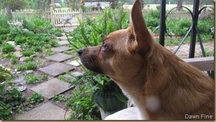 Pups_20090430_007