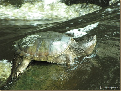 Killens Pond State Park DE_20090514_024