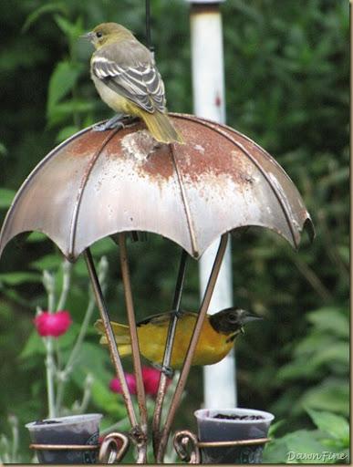 birds at feeder_20090623_004