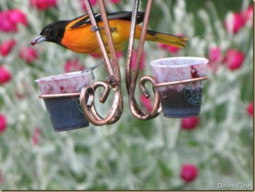 birds at feeder_20090624_040